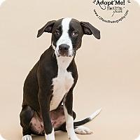 Adopt A Pet :: Jasmine - Apache Junction, AZ