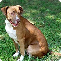 Adopt A Pet :: TWIX - Salem, NH