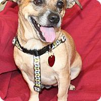 Adopt A Pet :: Hazel - Umatilla, FL