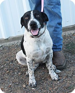 Australian Cattle Dog Mix Dog for adoption in Manchester, Connecticut - Thelma in CT