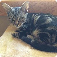 Adopt A Pet :: Marla - Hazlet, NJ