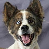 Adopt A Pet :: Edinger - Modesto, CA