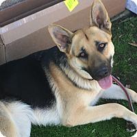 Adopt A Pet :: EMMA - pasadena, CA