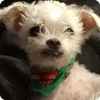 Adopt A Pet :: Ruth - San Diego, CA
