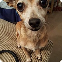 Adopt A Pet :: ADDIE - Rancho Cucamonga, CA
