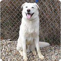 Adopt A Pet :: LeoPENDING - Toronto/Etobicoke/GTA, ON