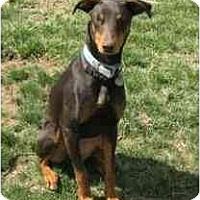 Adopt A Pet :: Shasta adoption pending - New Richmond, OH