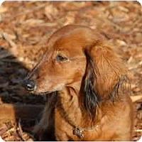 Adopt A Pet :: Lanie - Ft. Myers, FL