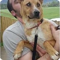 Adopt A Pet :: Savannah - Lewisville, IN