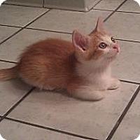 Adopt A Pet :: Rufus - Jeffersonville, IN