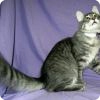 Adopt A Pet :: Dallas - Powell, OH