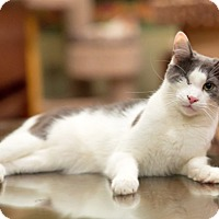 Adopt A Pet :: Zoe, a Special Sweetheart - Brooklyn, NY