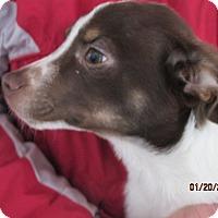 Adopt A Pet :: Timmy - Germantown, MD