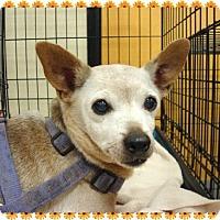 Adopt A Pet :: Nana - Las Vegas, NV