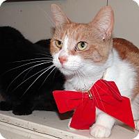 Adopt A Pet :: Eve - Lawrenceville, IL