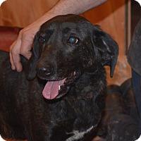 Adopt A Pet :: Sadie - ROME, NY