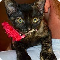 Adopt A Pet :: Miley - Richmond, VA