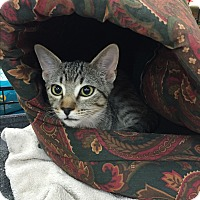 Adopt A Pet :: Catalpa - Rochester, MN