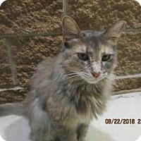 Adopt A Pet :: JINX - San Antonio, TX