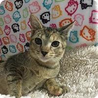 Adopt A Pet :: OPHELIA - Fountain Hills, AZ