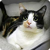 Adopt A Pet :: Trish - Casa Grande, AZ