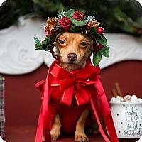 Adopt A Pet :: Pixie - Auburn, CA
