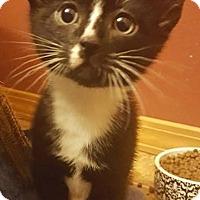 Adopt A Pet :: Hubert - Bellingham, WA