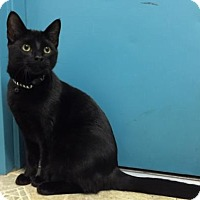 Adopt A Pet :: Mallow - Fort Collins, CO
