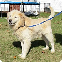 Adopt A Pet :: Zeus - Murrells Inlet, SC