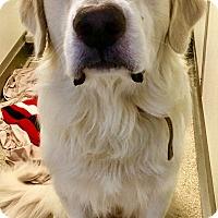 Adopt A Pet :: Riley - Oswego, IL