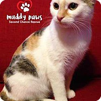 Adopt A Pet :: Sundae - Council Bluffs, IA