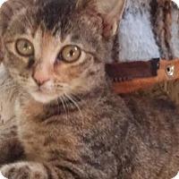 Adopt A Pet :: Pipa Rose - Littleton, CO