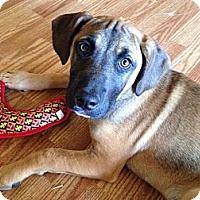 Adopt A Pet :: Howie - Marietta, GA