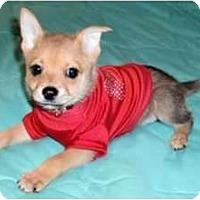 Adopt A Pet :: Wyatt - Mooy, AL