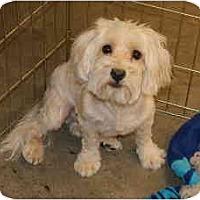 Adopt A Pet :: Truman - Gilbert, AZ