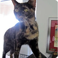 Adopt A Pet :: Josephine - Bunnell, FL