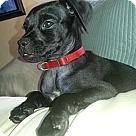 Adopt A Pet :: OLIVER