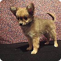Adopt A Pet :: Smokey - Murphy, NC