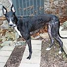 Adopt A Pet :: Tilly