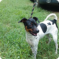 Adopt A Pet :: Glenda - Lebanon, CT
