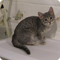 Adopt A Pet :: Tallulah - Geneseo, IL