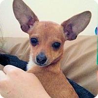Adopt A Pet :: Dottie - North Ogden, UT