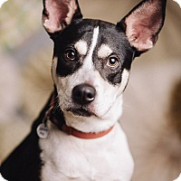 Adopt A Pet :: Ryder - Portland, OR