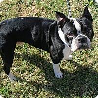 Adopt A Pet :: Ryan - Weatherford, TX
