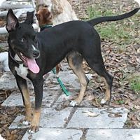 Adopt A Pet :: Luna - Umatilla, FL