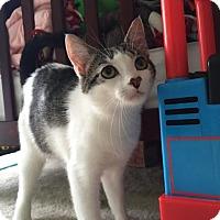 Adopt A Pet :: Nyla (foster care) - Philadelphia, PA