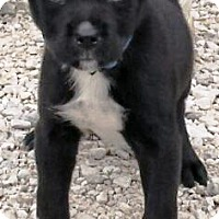 Adopt A Pet :: I'M ADOPTED Ladybugg Schmaedek - Oswego, IL