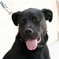 Adopt A Pet :: Otis - Palmdale, CA