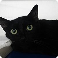 Adopt A Pet :: Dora - Elyria, OH