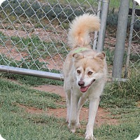 Adopt A Pet :: Blondie - Denver City, TX